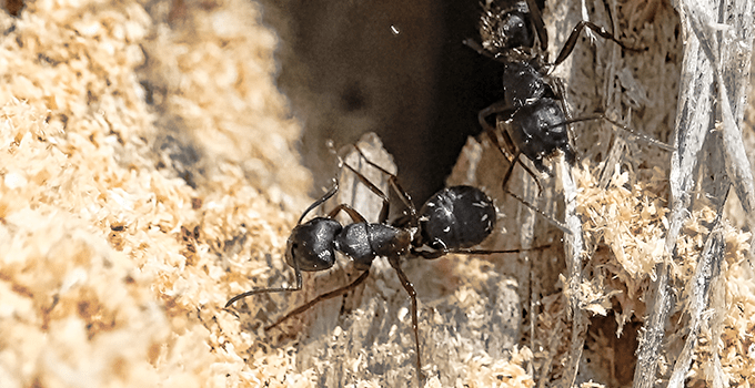 Factors that can guide you to book a professional ant control service